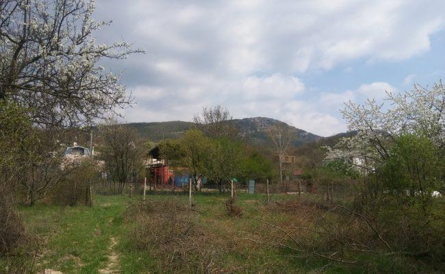 niva-orlinoe-1