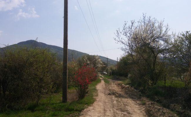 niva-orlinoe-2